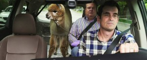 An alpaca, Eric Stonestreet and Ty Burrell in Modern Family