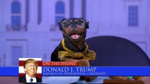 Triumph the Insult Comic Dog during an election special